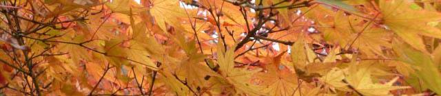 紅葉と桜を見てきました