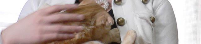 猫さんと撮影(2)